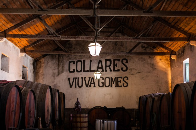 Adega Viúva Gomes, Colares Wines and Vineyards