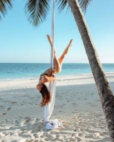 Aerial Silks Palm Tree