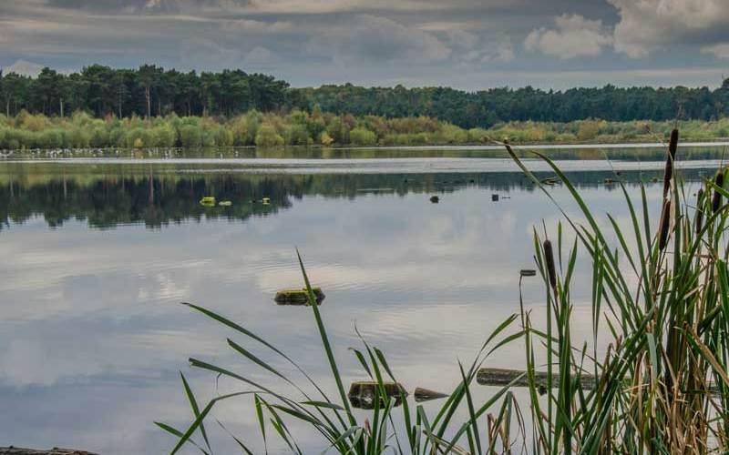 Blakemere Moss, a reflooded wetland in the Delamere Froset of Cheshire