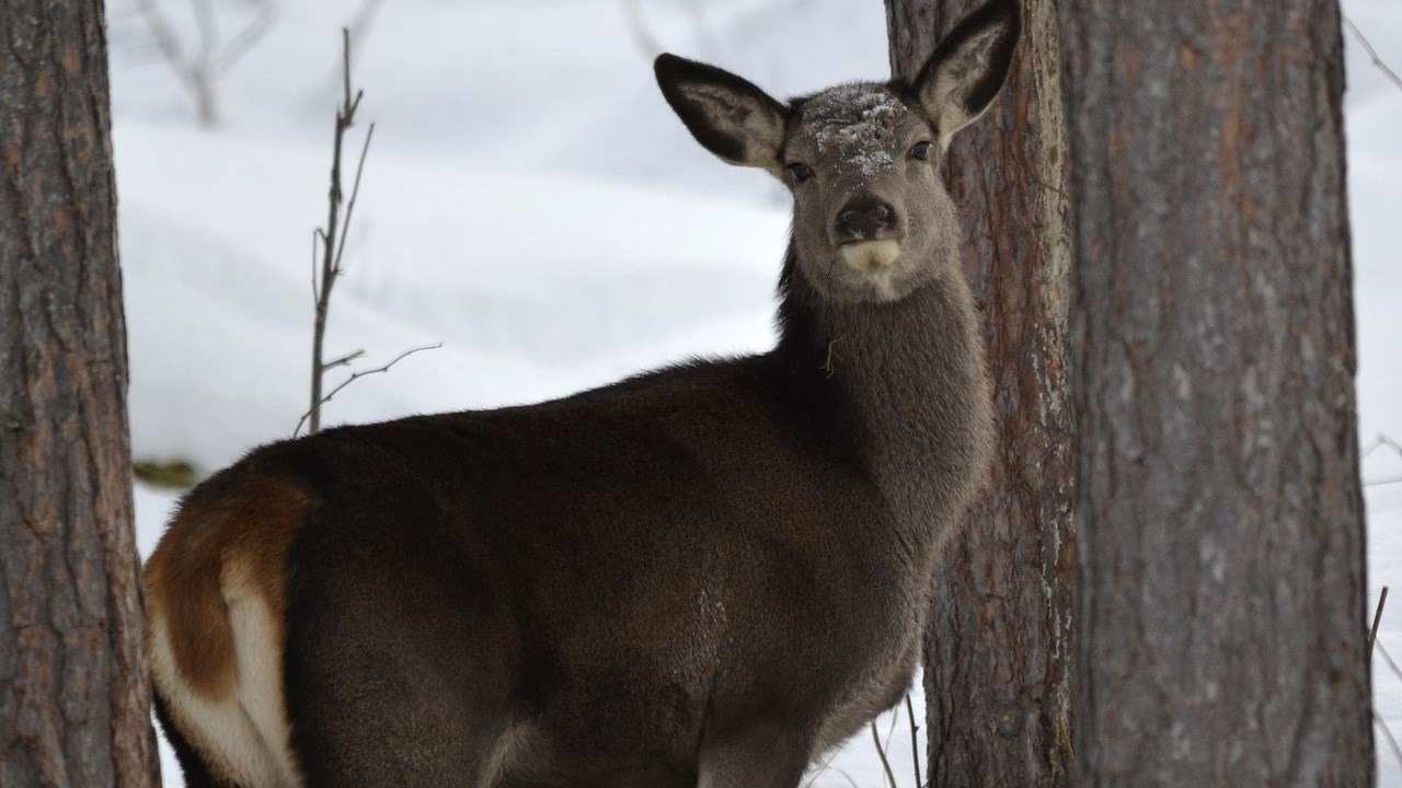 deer  --  PHOTO Deer, Photo_1520018455594.jpg.jpg