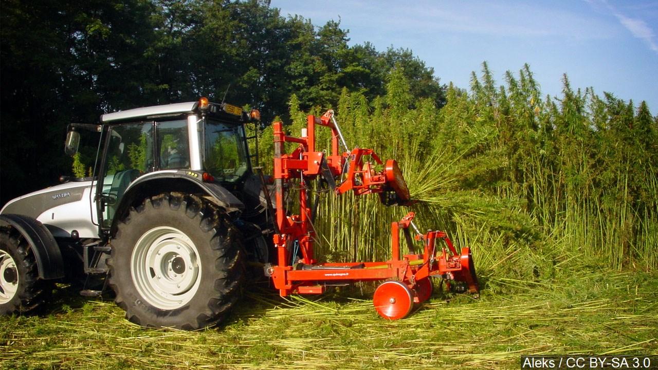 Hemp farming, production_1551890865481.jpg.jpg
