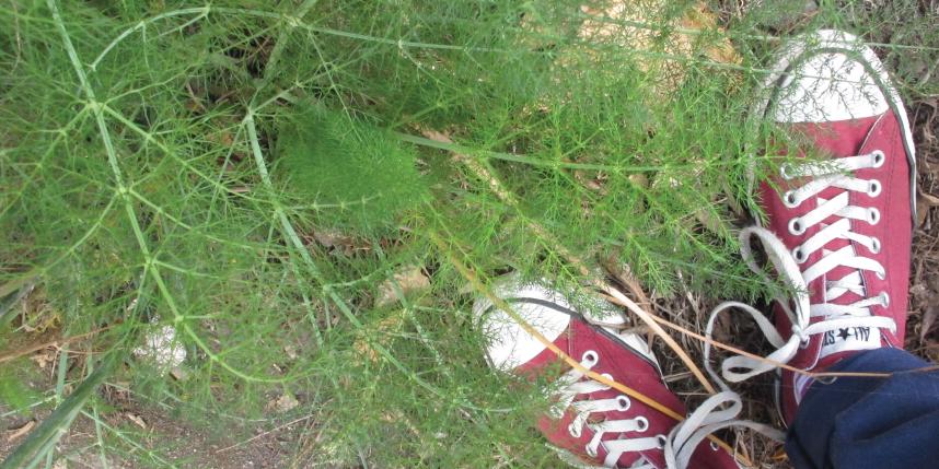 fennel fizz feet