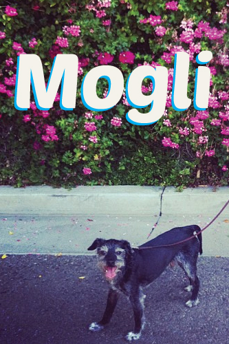 Mogli the Dog