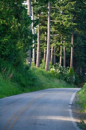 Lummi Island Road
