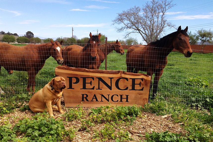 Pence Ranch Horses