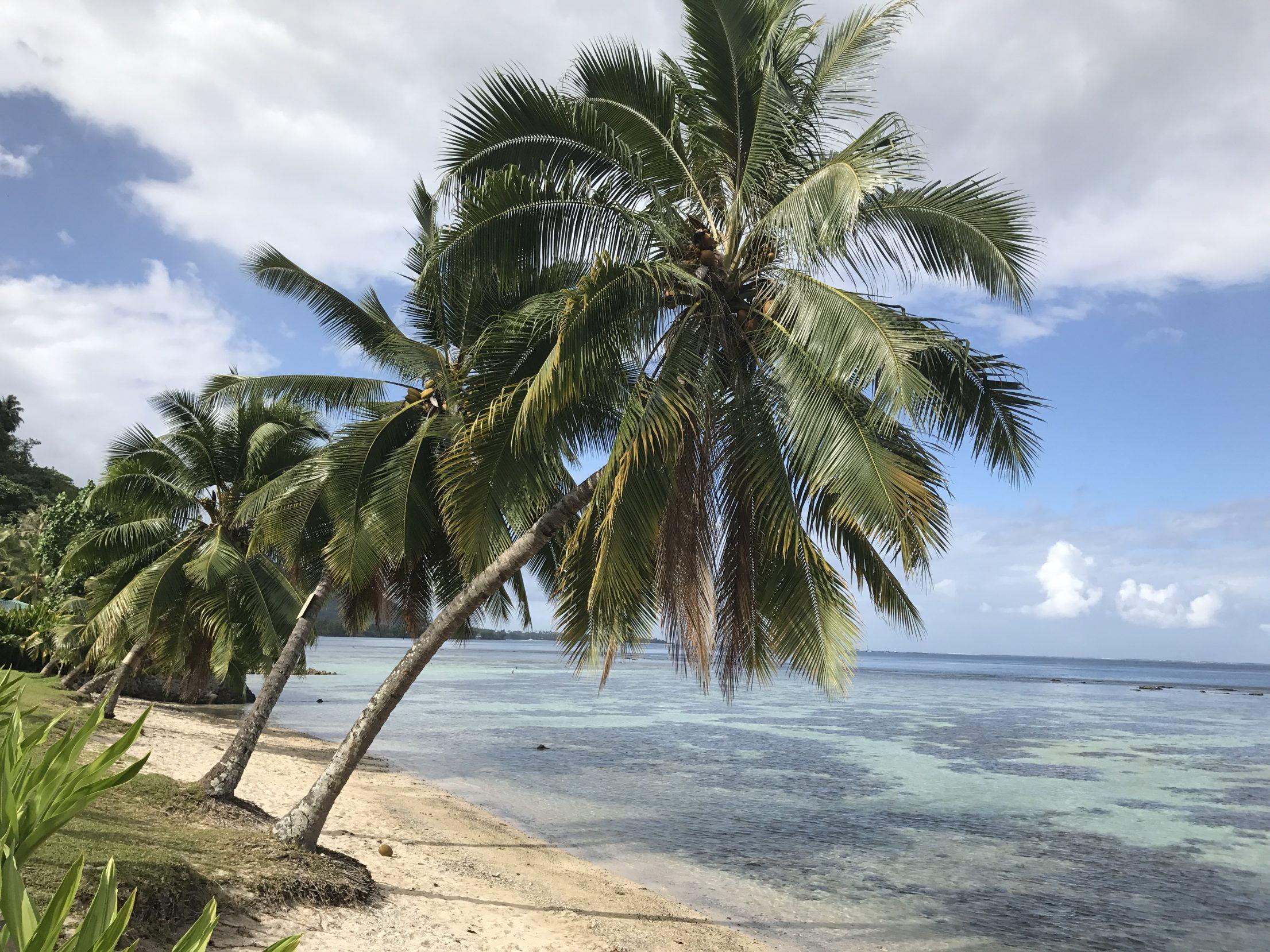 All trees Tahiti