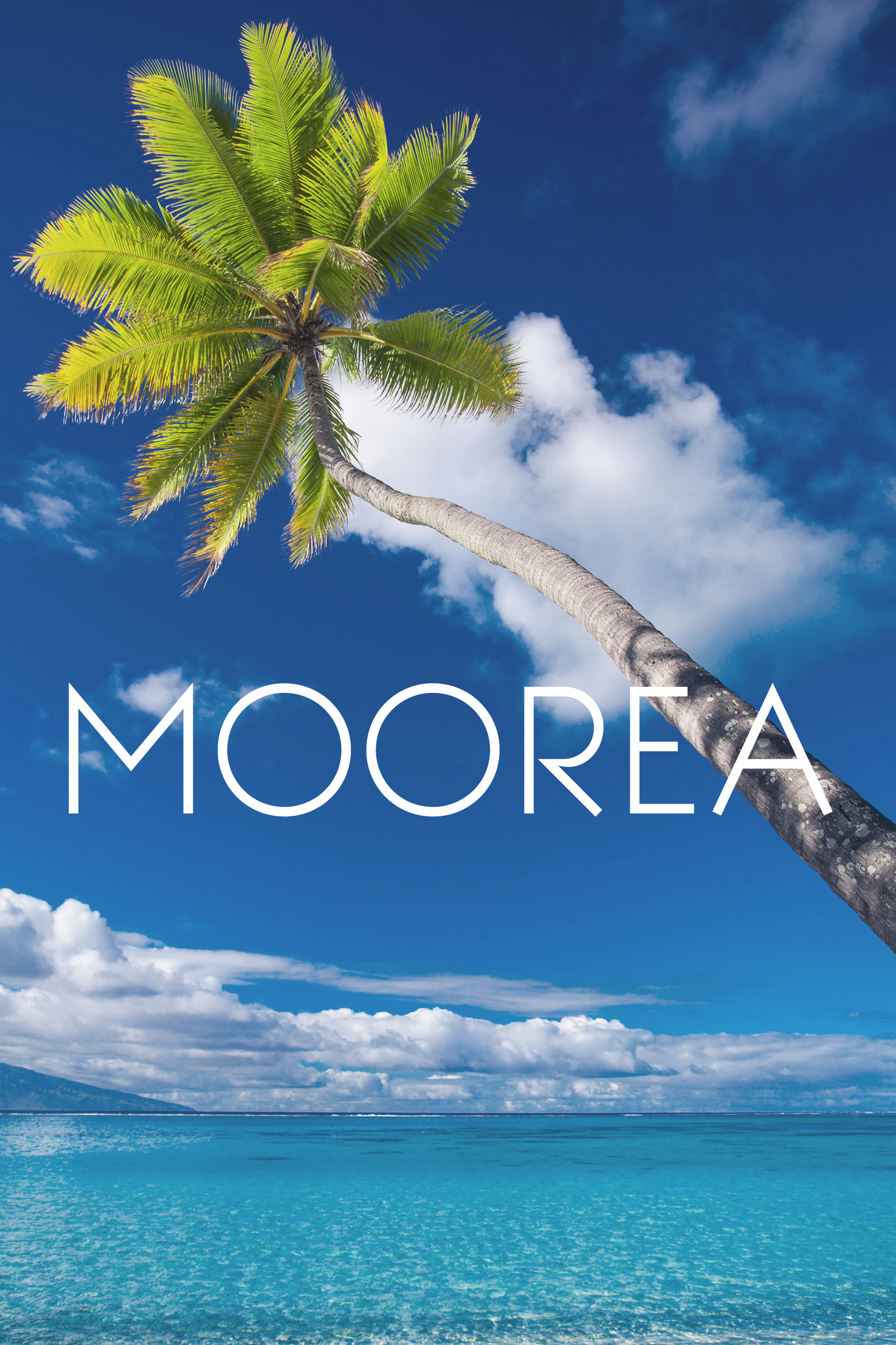 Palm Tree Moorea
