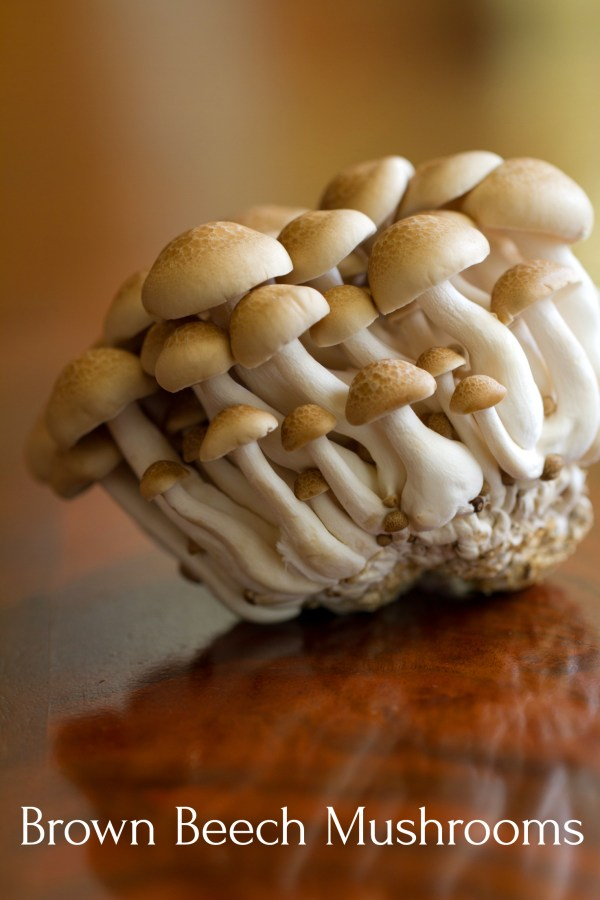 East Asian Brown Beech Mushrooms (also known also as Buna-shimeji, Hypsizigus tessellatus, or Brown Clamshell)