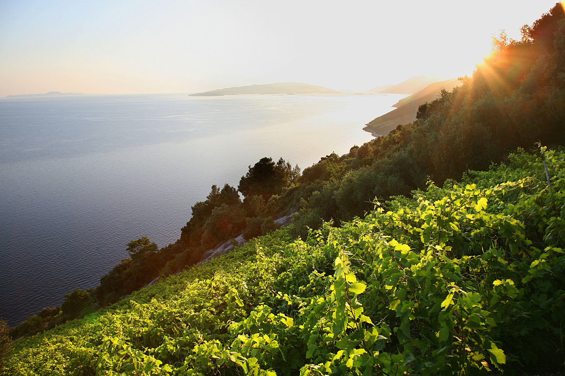 Dingac Vineyard, Pelješac Peninsula