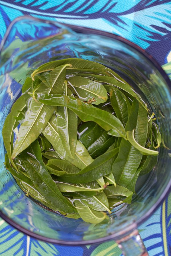 Lemon Verbena Infused Vodka (for the Vesper Martini)