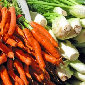 carrots and fennel bulb