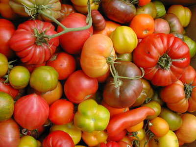 heirloom tomatoes of many varieties