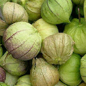 raw tomatillos in husks