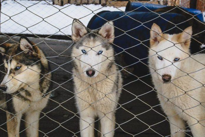 4-valle-lobos-ushuaia-6447
