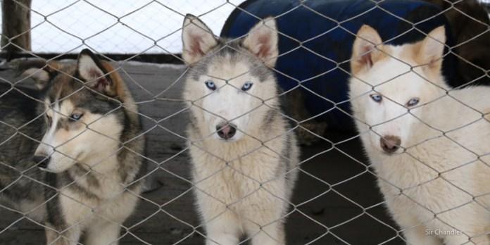 Valle de lobos en Ushuaia