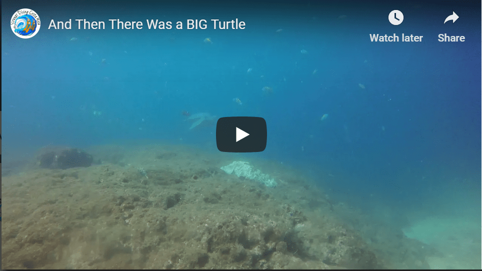 And Then There Was a BIG Turtle
