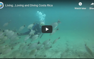 Living…Loving and Diving Costa Rica
