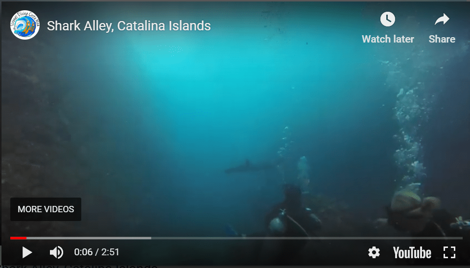 Shark Alley, Catalina Islands