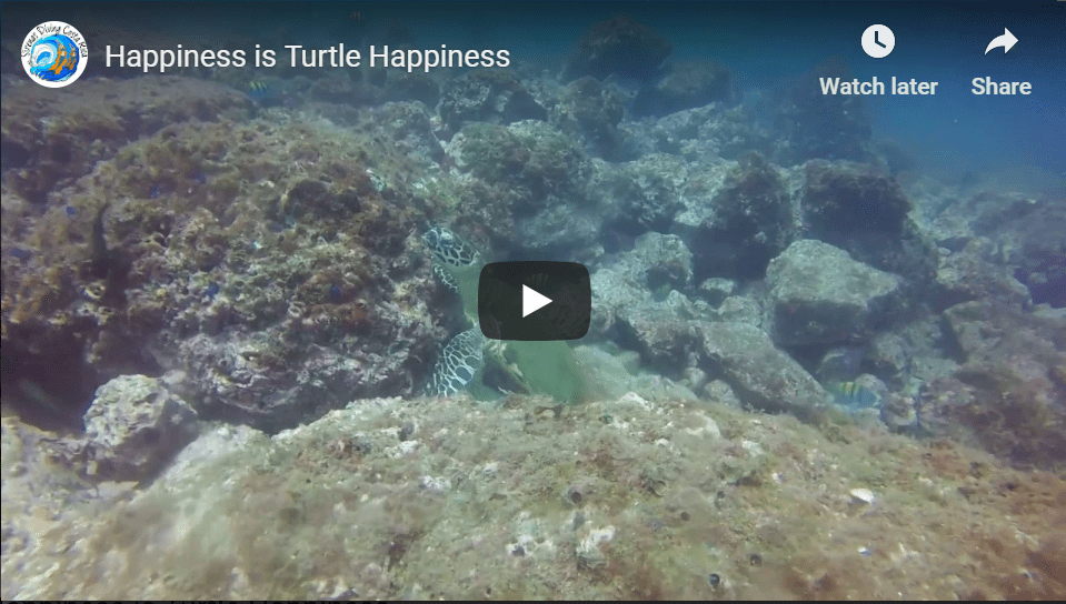 Happiness is Turtle Happiness