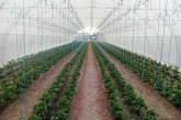 Pomoć poljoprivrednicima kroz kreditnu i sektorsku podršku