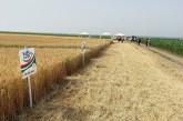 Dani polja strnih žita - uz nauku do većih prinosa