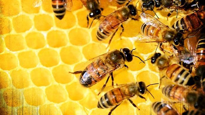 honey farm tamil