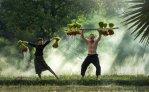 விவசாயிகளுக்கு ரூ 5,00,000 மானியம், மானவாரி வேளாண்மை வளர்ச்சித் திட்டம்