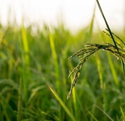 how to prepare land for organic in tamil