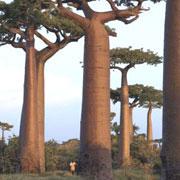 GdL SISEF: Foreste e Clima