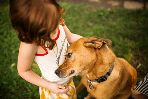 Menina e um cãozinho