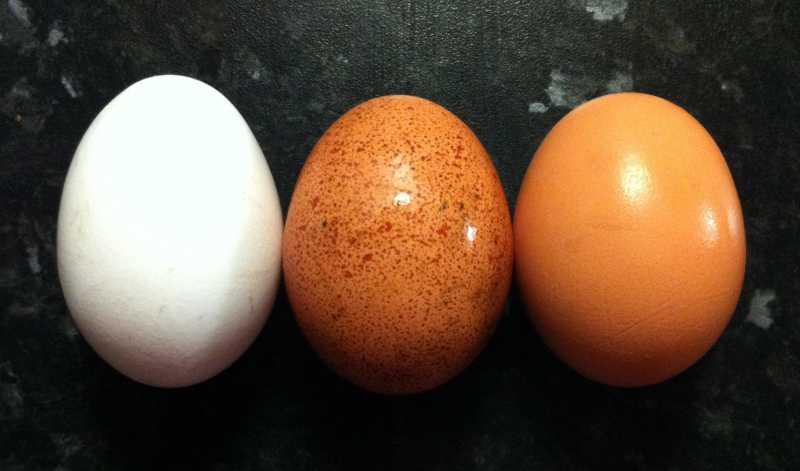 12 coisas que acontecem com seu corpo quando você começa a comer ovos