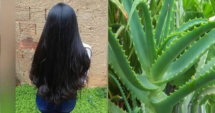Aprenda engrossar o cabelo com babosa e tenha fios encorpados e volumosos