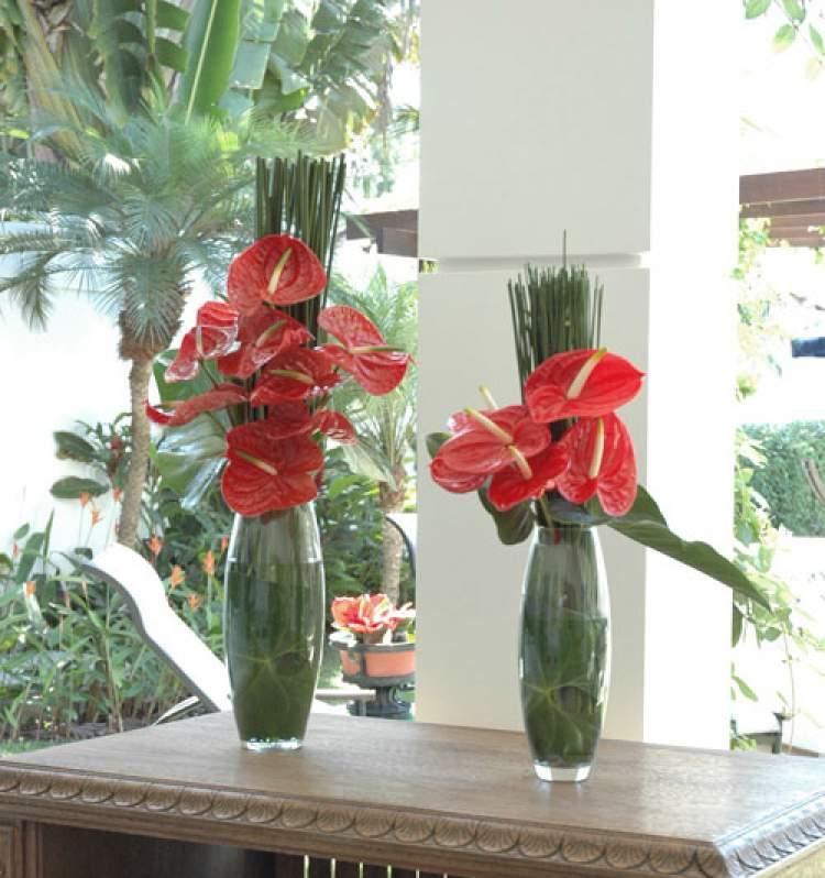 Antúrio é uma das plantas para decorar o apartamento com muita elegância e bom gosto