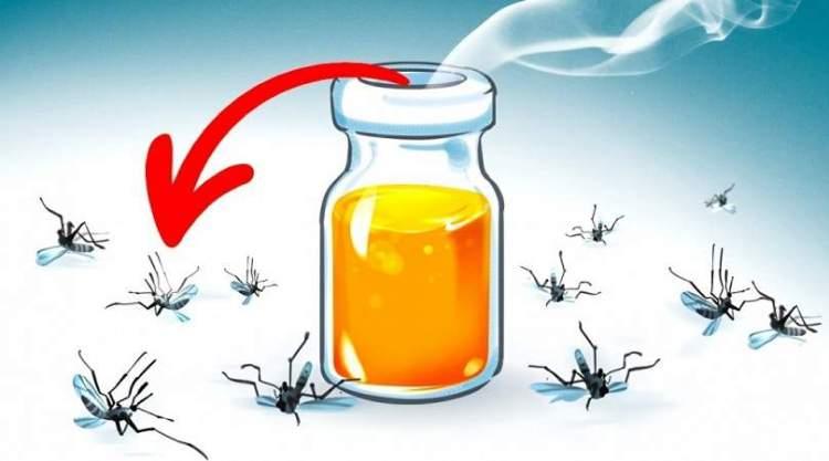 aromas que espantam os mosquitos