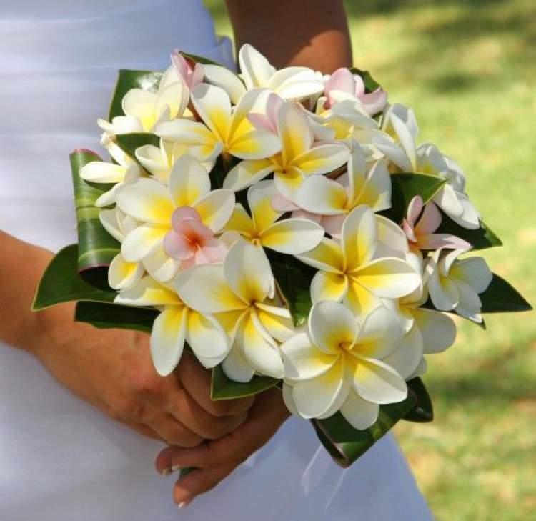 Jasmim é uma das flores para buquês e arranjos