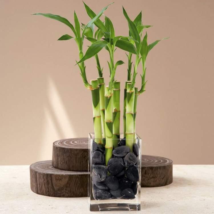 Bambu é uma das plantas que podem ser cultivadas no escritório para reduzir o estresseé uma das plantas que podem ser cultivadas no escritório para reduzir o estresse