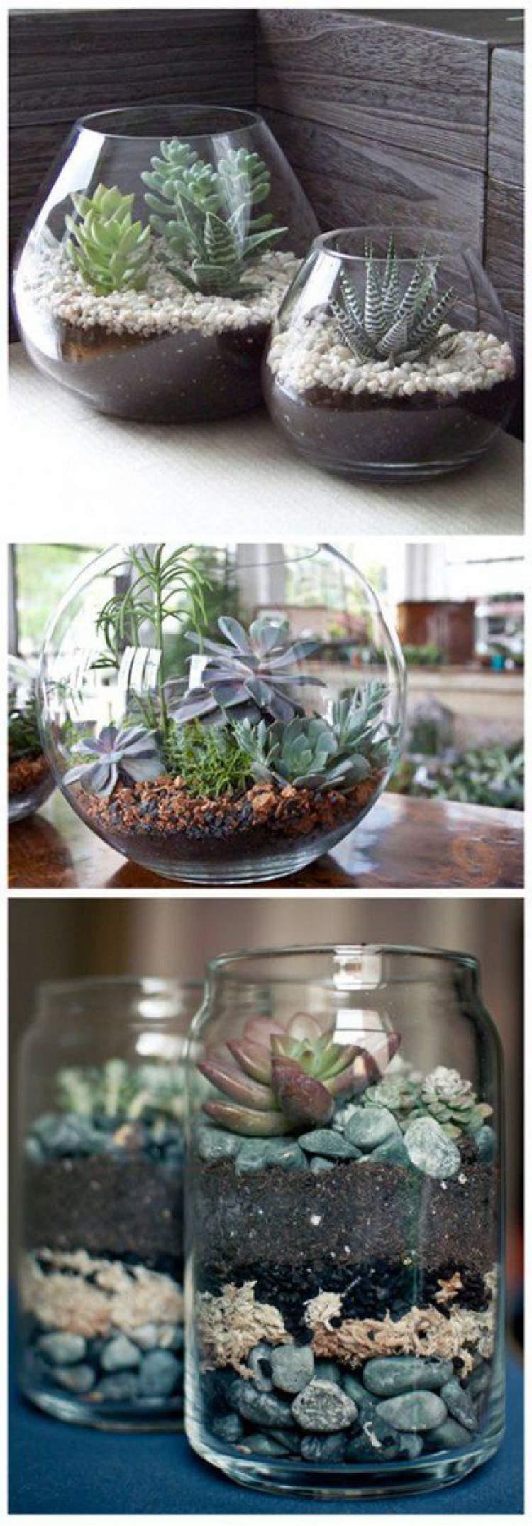Terrários feitos em aquários ou potes de vidro