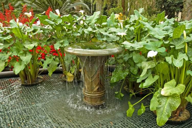 Fonte cercada de plantas