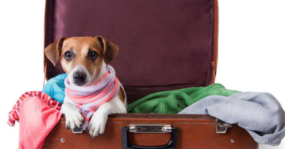 Viajar em segurança com o pet requer cuidados que precisam ser tomados com antecedência