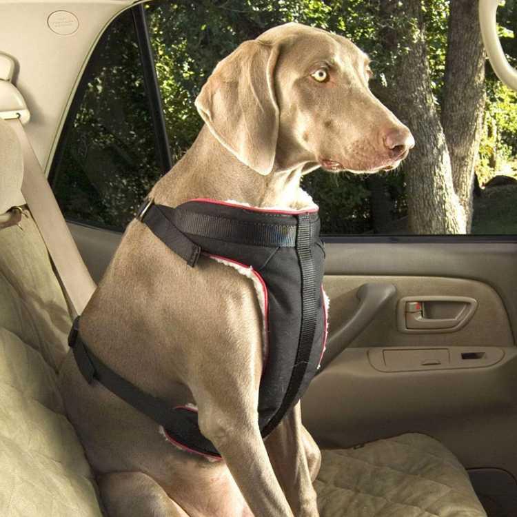 dicas para viajar em segurança com o pet