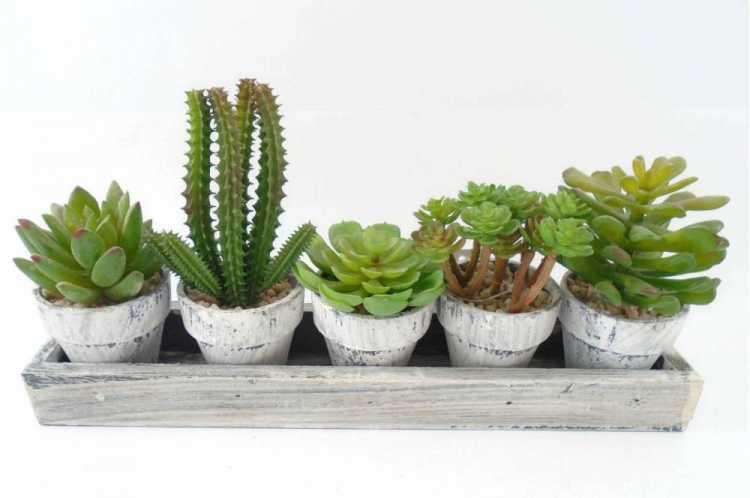 Cacto é uma das plantas que suportam o clima frio