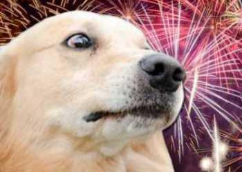 Como proteger o pet dos barulhos de fogos de artifício