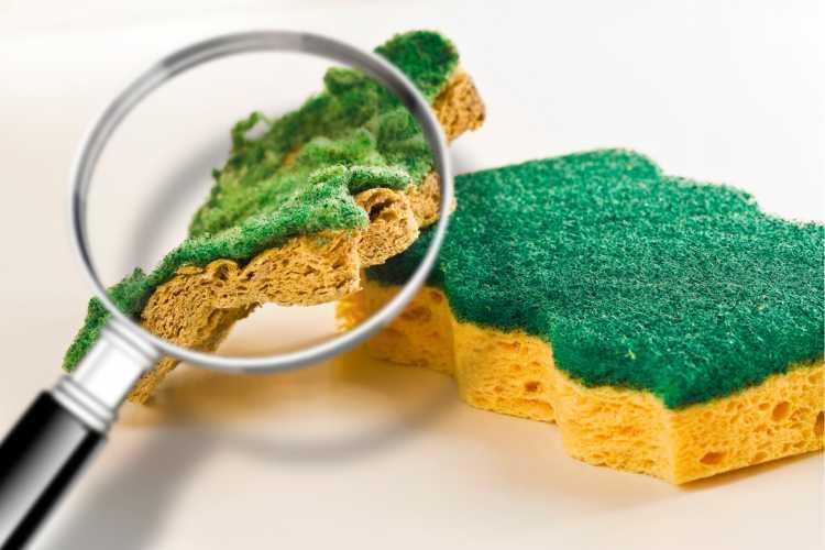 Esponja de lavar louça é um dos objetos de casa que são muito sujos