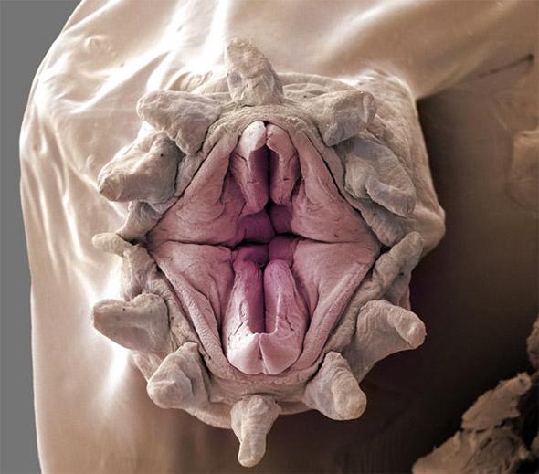 Minhoca Vagina