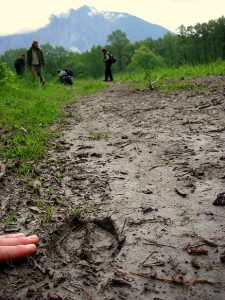 Discovering elk prints on a trail.