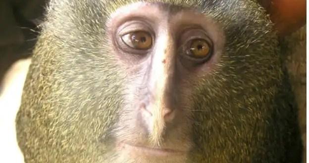 Descubren una nueva especie de mono