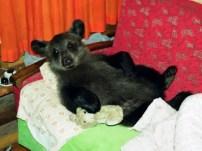 Mujer crió a un oso como su hijo - Fotos