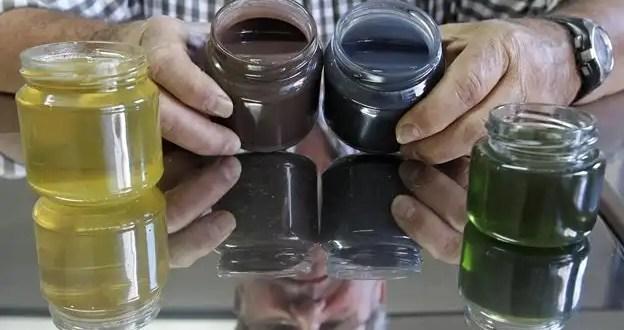Insólito: Abejas producen miel de colores
