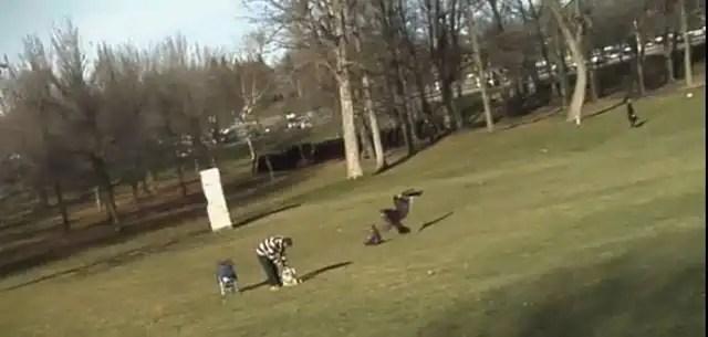 Video: Águila intenta cazar un bebé en un parque