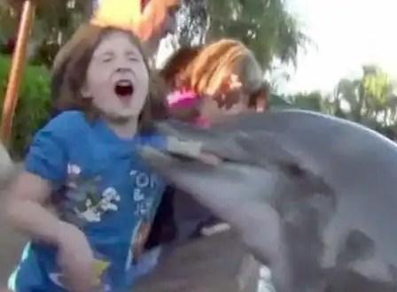 Video: Delfín ataca a una niña de ocho años
